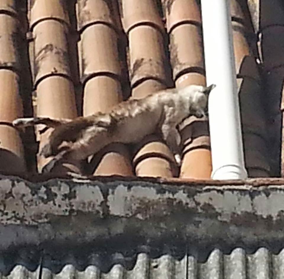 Matança de gatos em Ipu. onda de envenenamento dos felinos na cidade preocupa cidadãos
