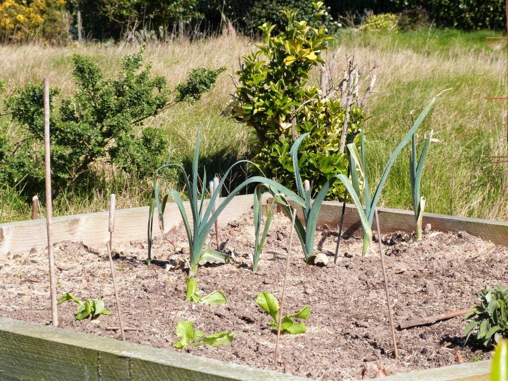 Le jardin du vent comment dire youhoutralalayoupie - Comment congeler les courgettes du jardin ...