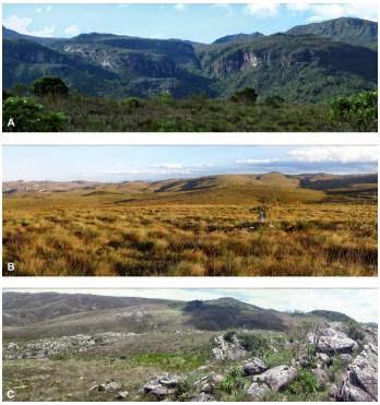 Características dd habitat de Atractus-spinalis - Serra-do-Cipó