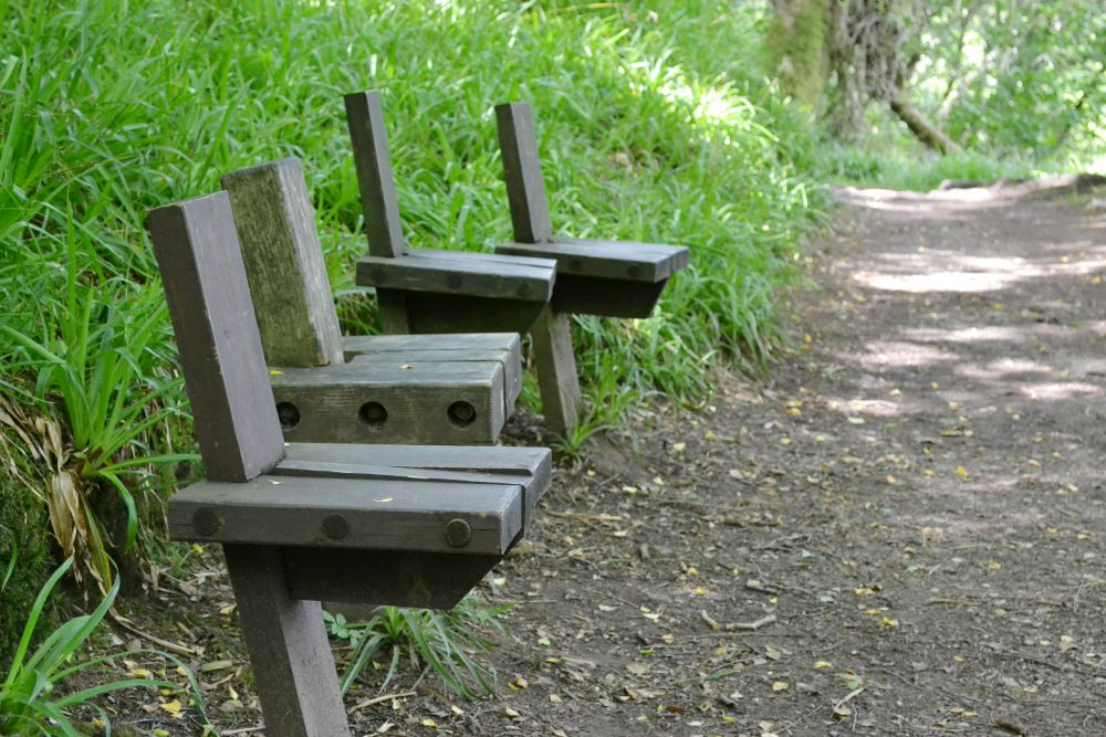 wooden seats benches forest new lanark falls of clyde