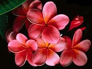 źródło · źródło. Czyż nie są piękne? P.S. Nie wiem jak wy ale mnie drażni . (tapety kwiaty)