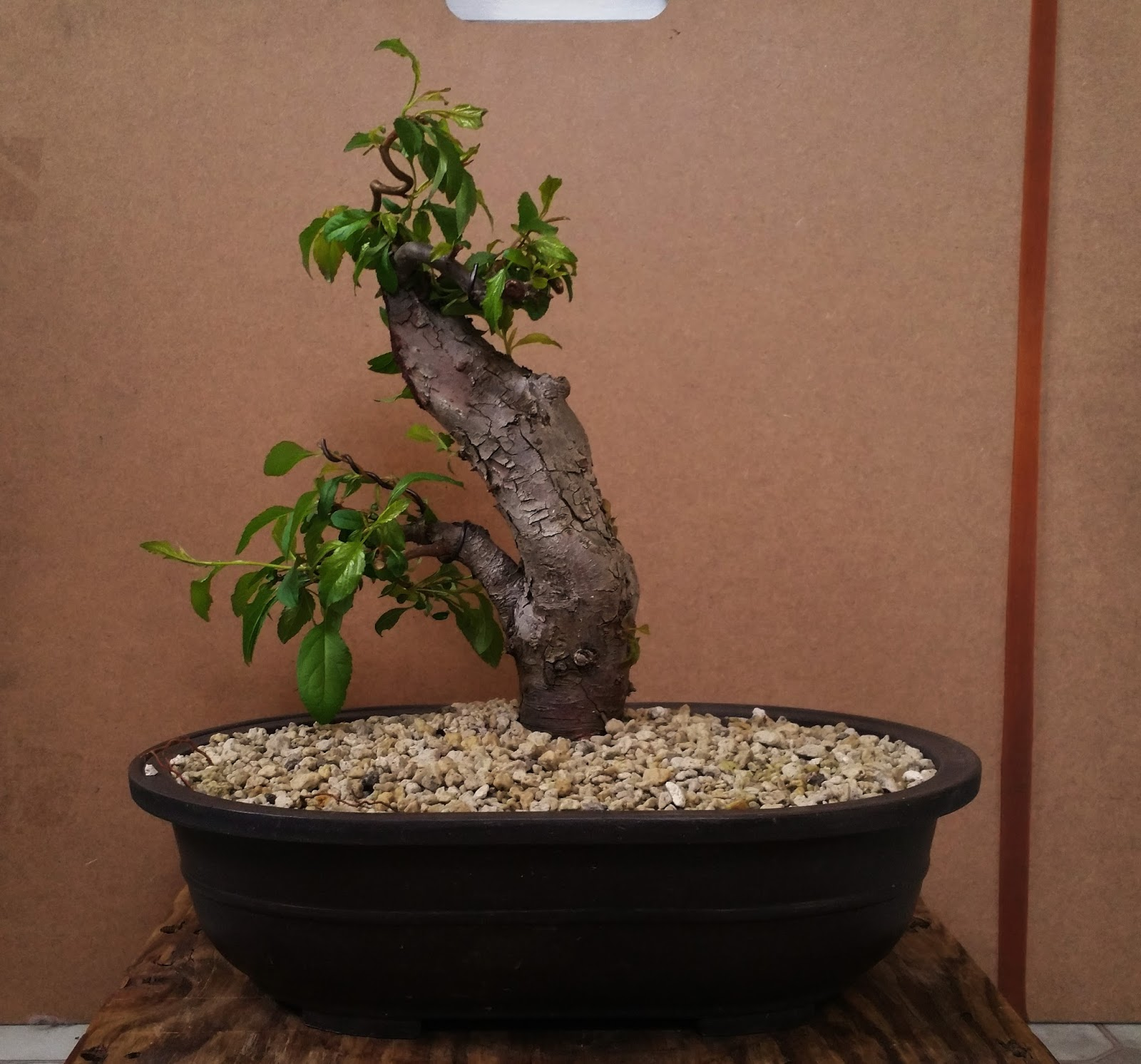 Laser Beam Bonsai