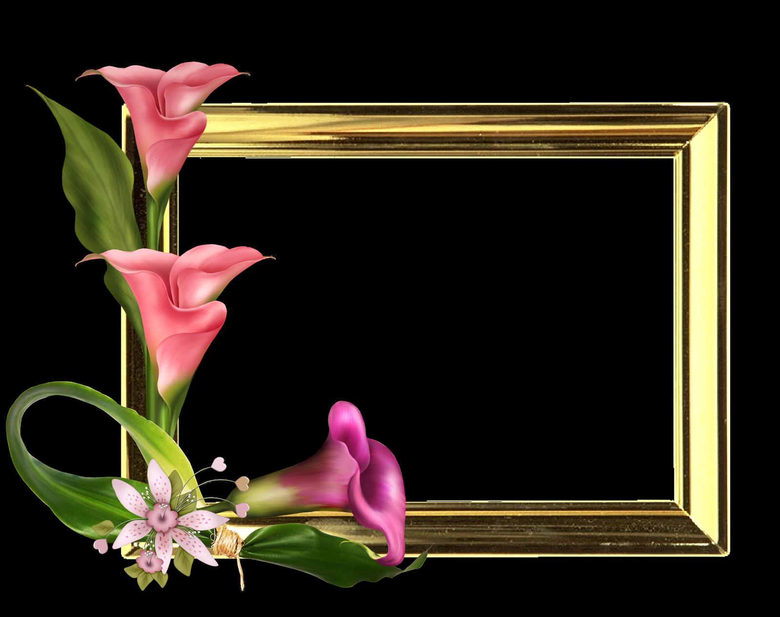 Colecci n de gifs marcos para fotos de flores - Marcos fotos pared ...