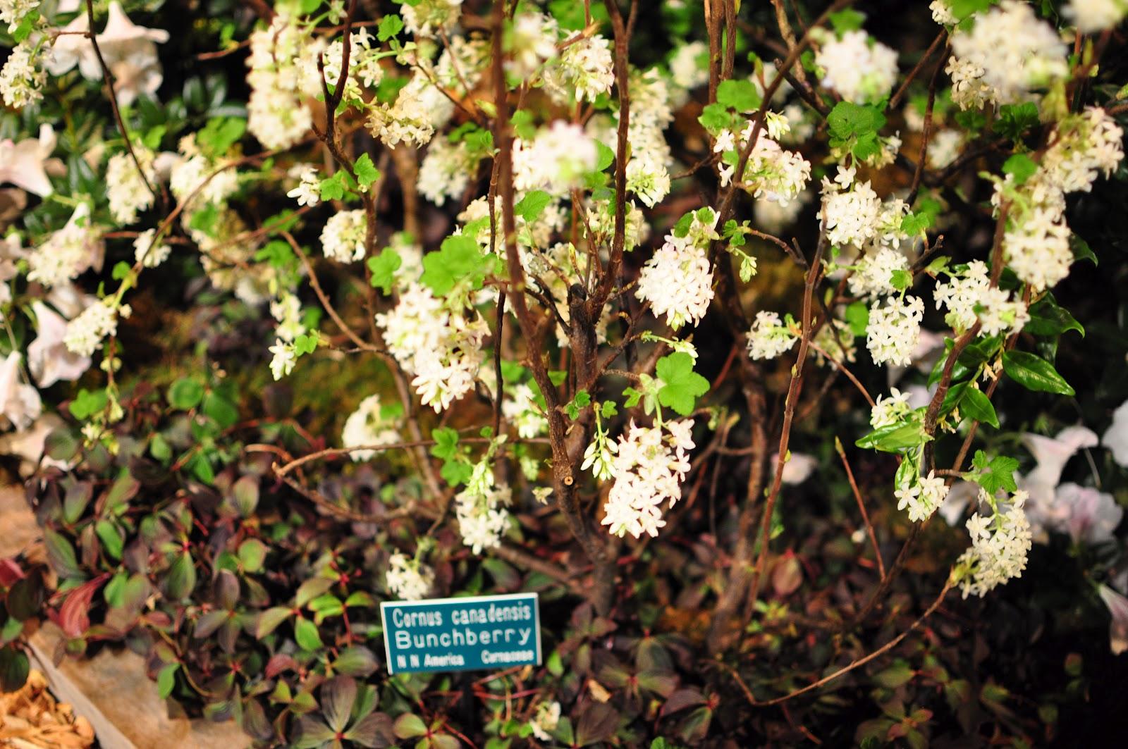 Megan Seagren\'s Journal: Plants for Pacific Northwest Shade Gardens