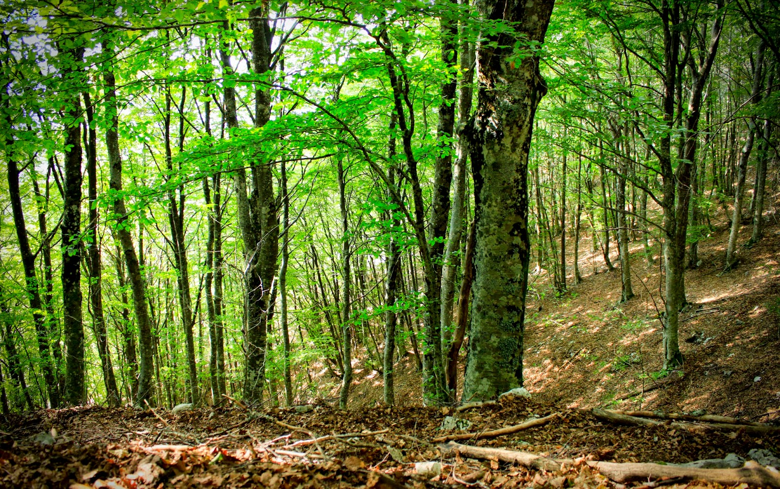Scelsablog le regioni a clima temperato for Pianta della foresta di pioppo