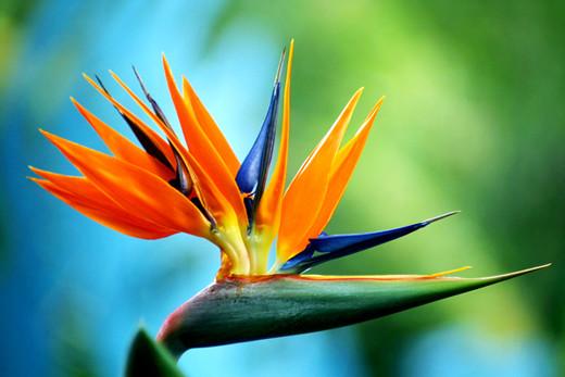 lovely flowers very superb beautifull flower high resolution, Natural flower