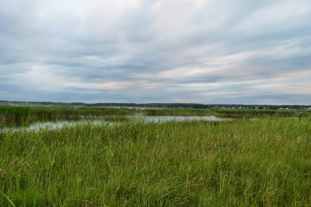 За камышами озеро Яу-Балык