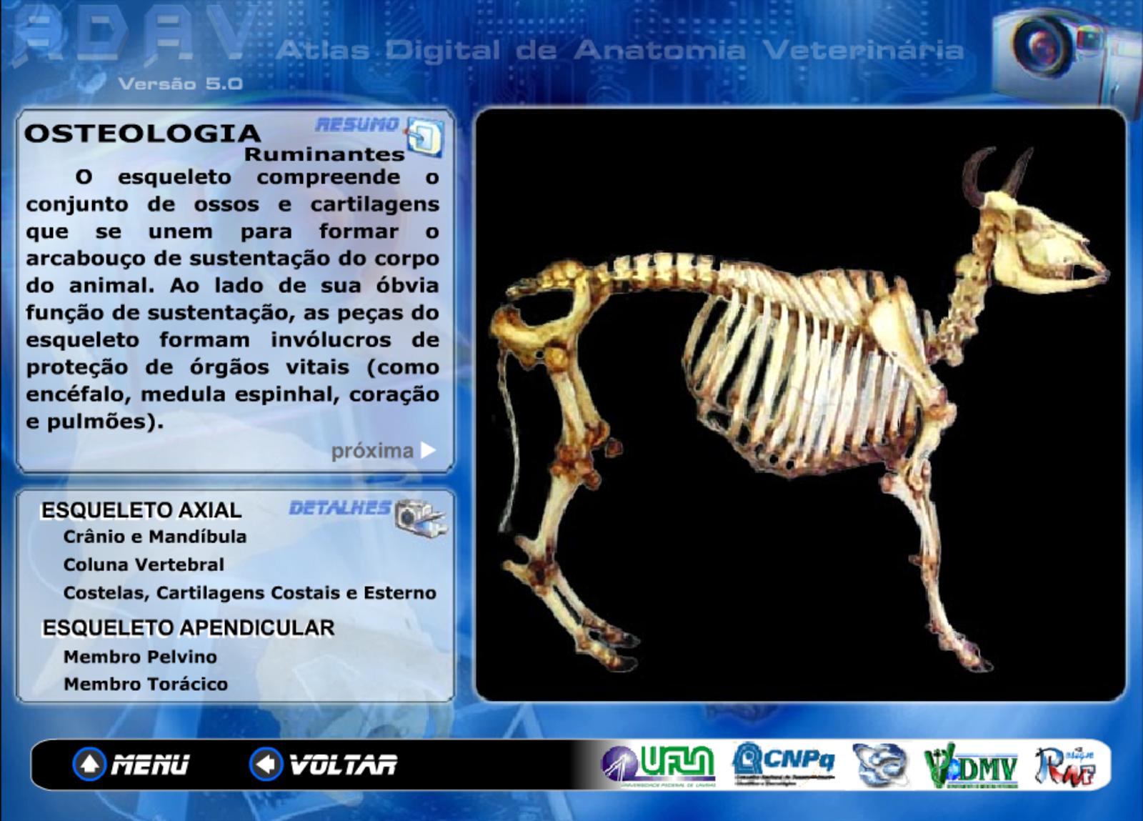 Anatomia Veterinária, novas tecnologias para estudo | Medicina ...