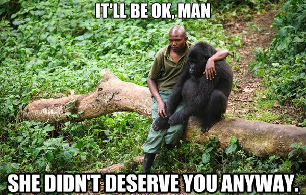 30 Funny animal captions - part 19 (30 pics), gorilla and its keeper, she didnt deserve you anyway caption