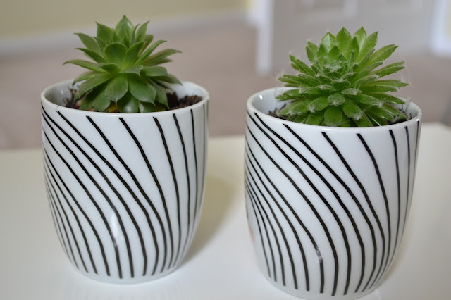 Succulents in coffee cups