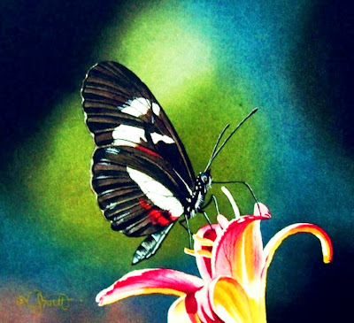 cuadros-con-mariposas
