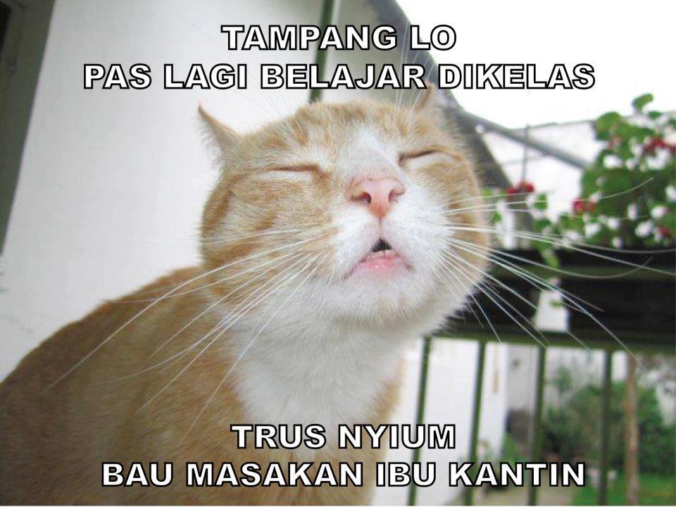 Gambar Kucing Meme godean.web.id