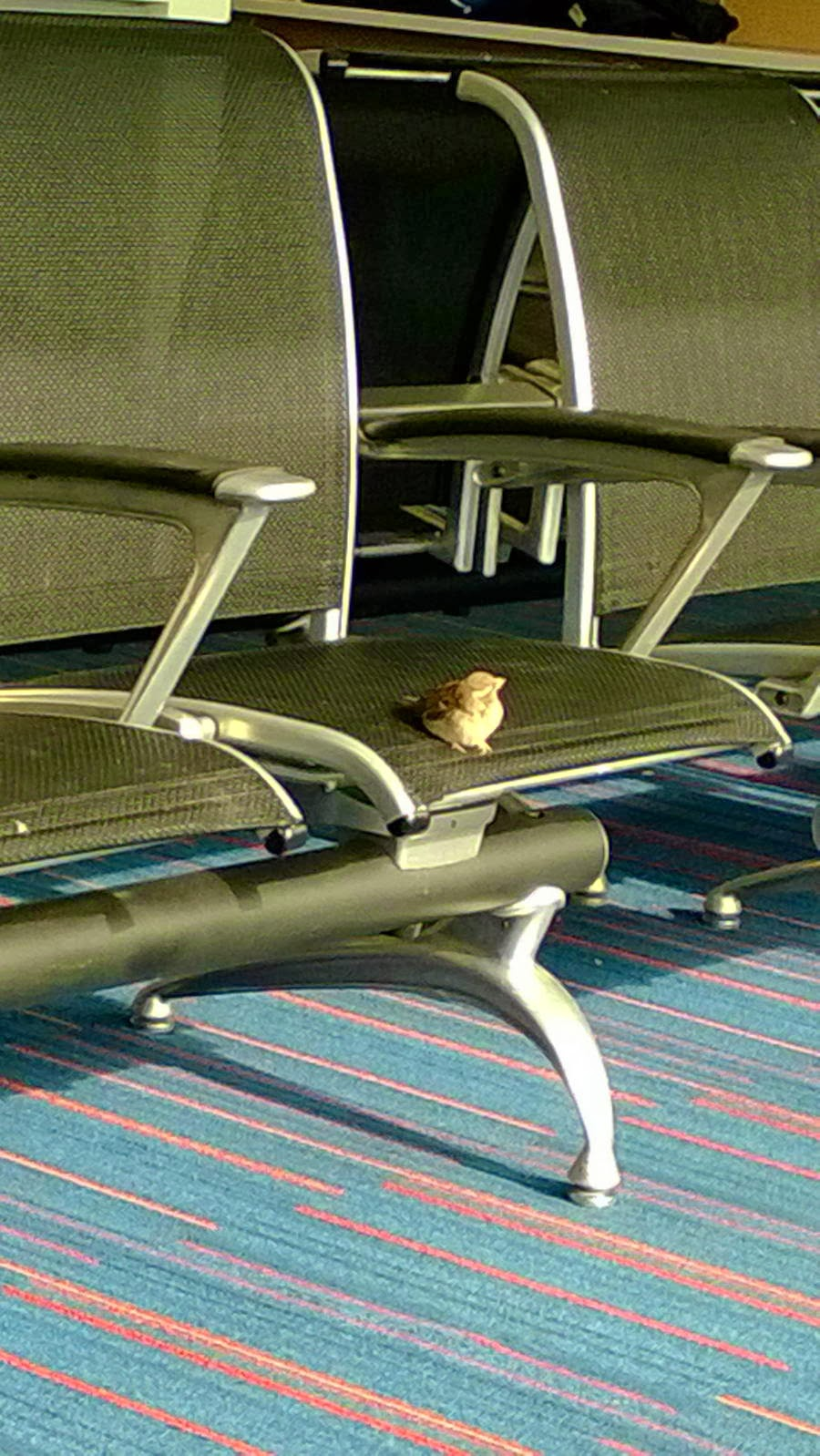 Funny animals of the week - 31 January 2014 (40 pics), bird perches in an airport chair
