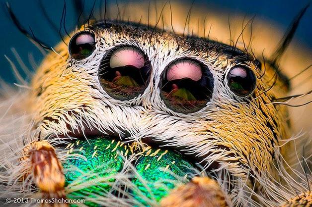 Medo! Confira essas fotos assustadoras de aranhas