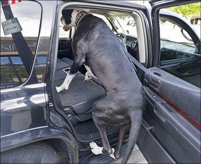 http://4.bp.blogspot.com/-DA_UoeITfPA/Tocc1g_7wxI/AAAAAAAAjaQ/LljiGuJpjYc/s1600/Nova+Tallest+Dog+-+002.jpg