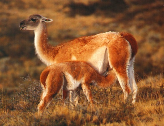 extincion en argentina