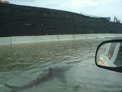 道路にサメ