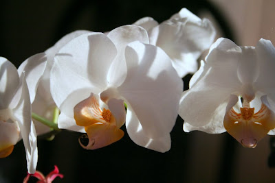 Focus on life: The beauty of flowers: The white orchid :: All Pretty Things