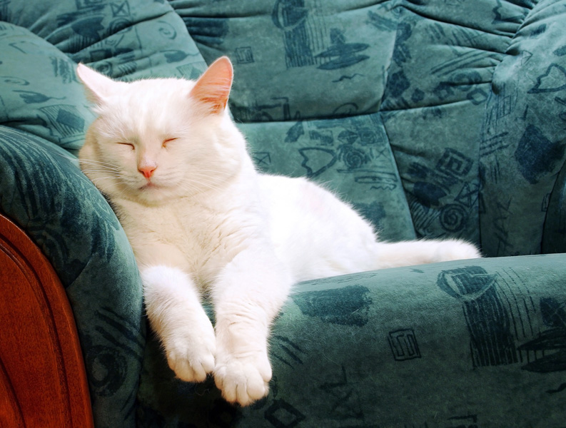 A pretty white cat is sleeping on the settee