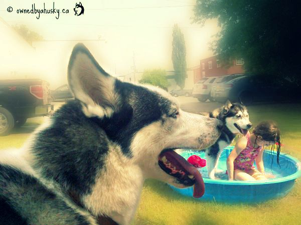 huskies love water