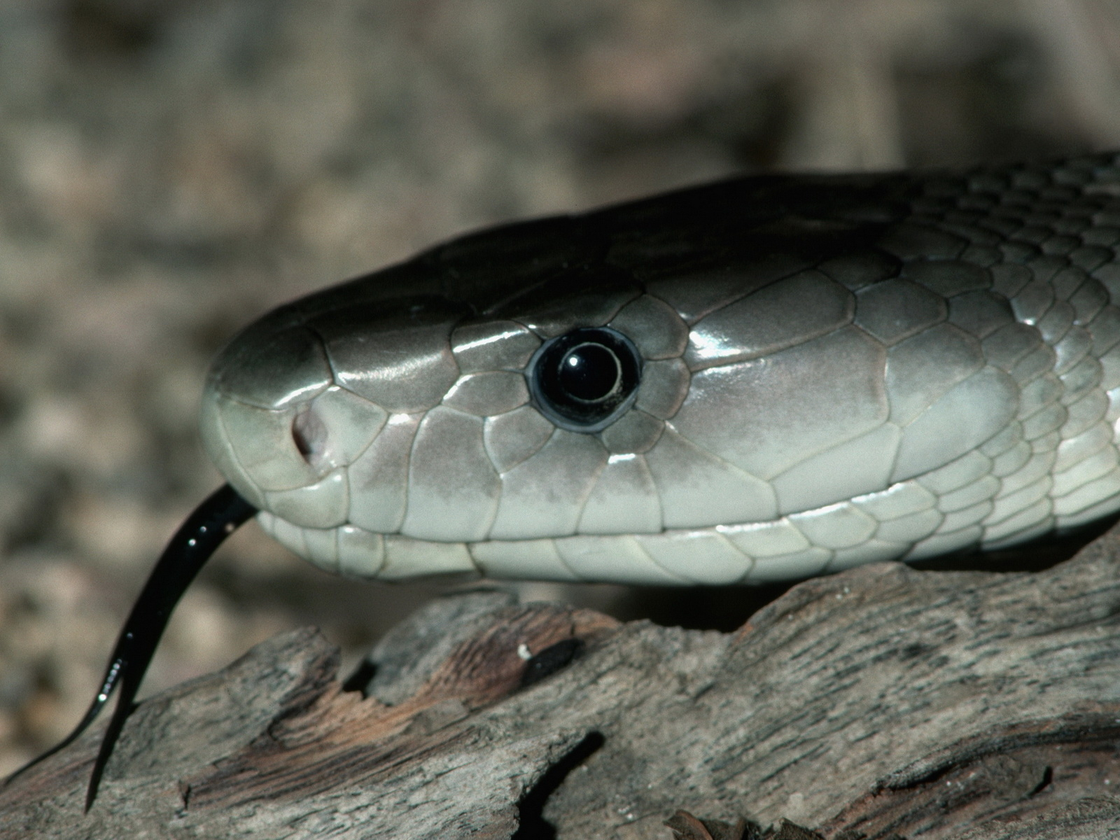 snake - photo #19
