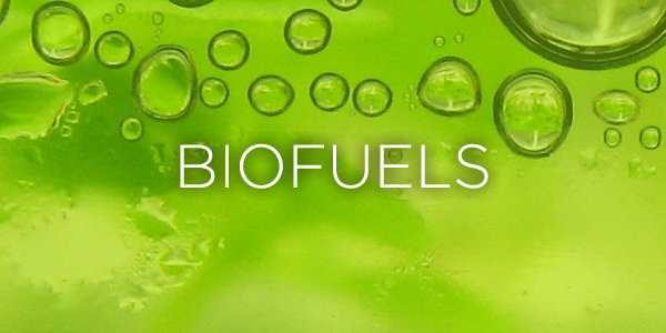 how to turn palm oil into biodiesel
