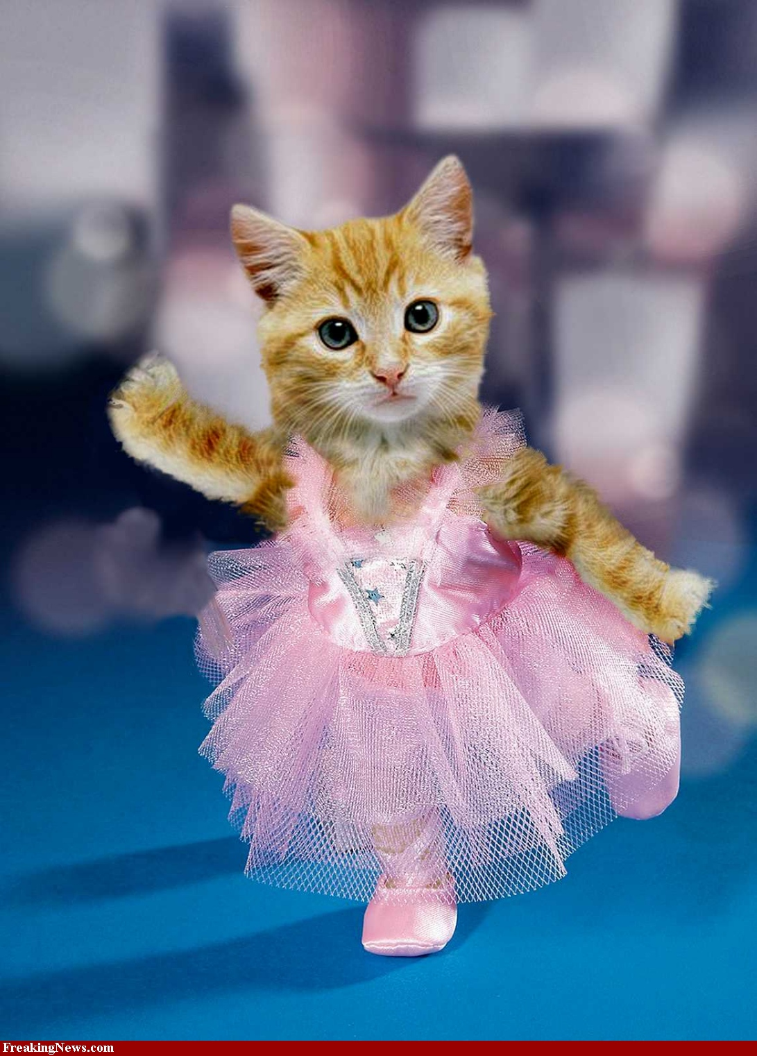 Cute Kittens Dressed Up