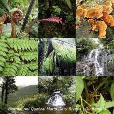 Image result for Parque Nacional Semuc Champey Flora y fauna