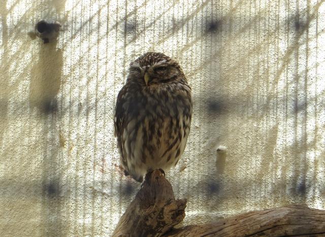 owl palmitos park gran canaria