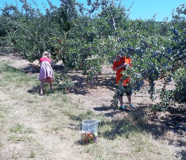 Pick your own apples or other fruit in Indiana: Mooresville