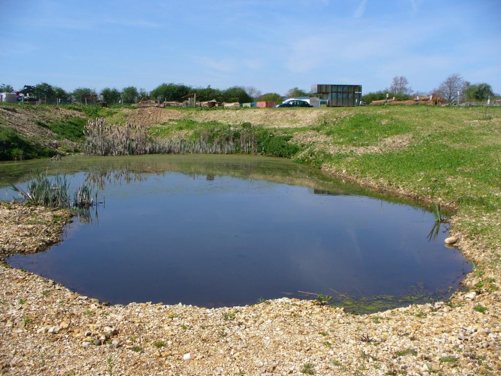 Dave Hubble 39 S Ecology Spot Diary Of A Farm Pond April 2011
