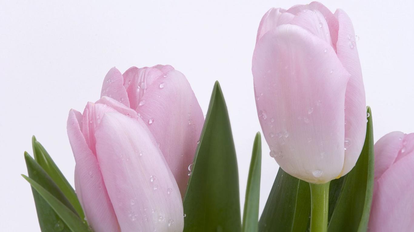 http://4.bp.blogspot.com/-DDFdWkG-I7A/TcLDqaFS3sI/AAAAAAAAJSc/xrfVjX1qWsI/s1600/flowers_wallpaper_09_1366x768.jpg