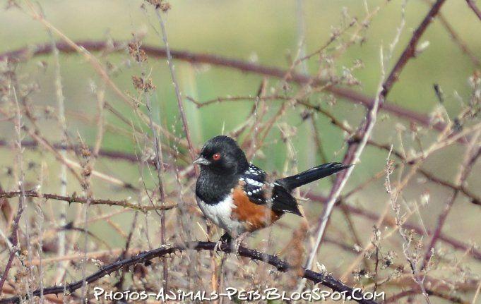 http://4.bp.blogspot.com/-DDGePTQ52Js/Tt-GDhLMxlI/AAAAAAAACf4/tt7sI8IMeCw/s1600/image%2BLonely%2Bbird.jpg