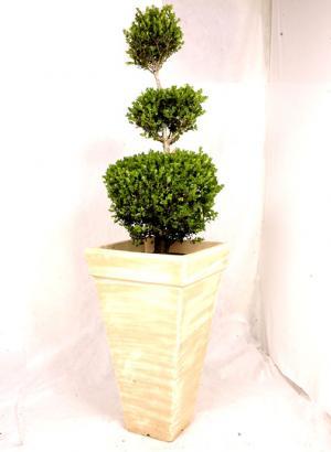 vaso 1 Modelos de Vasos de Planta