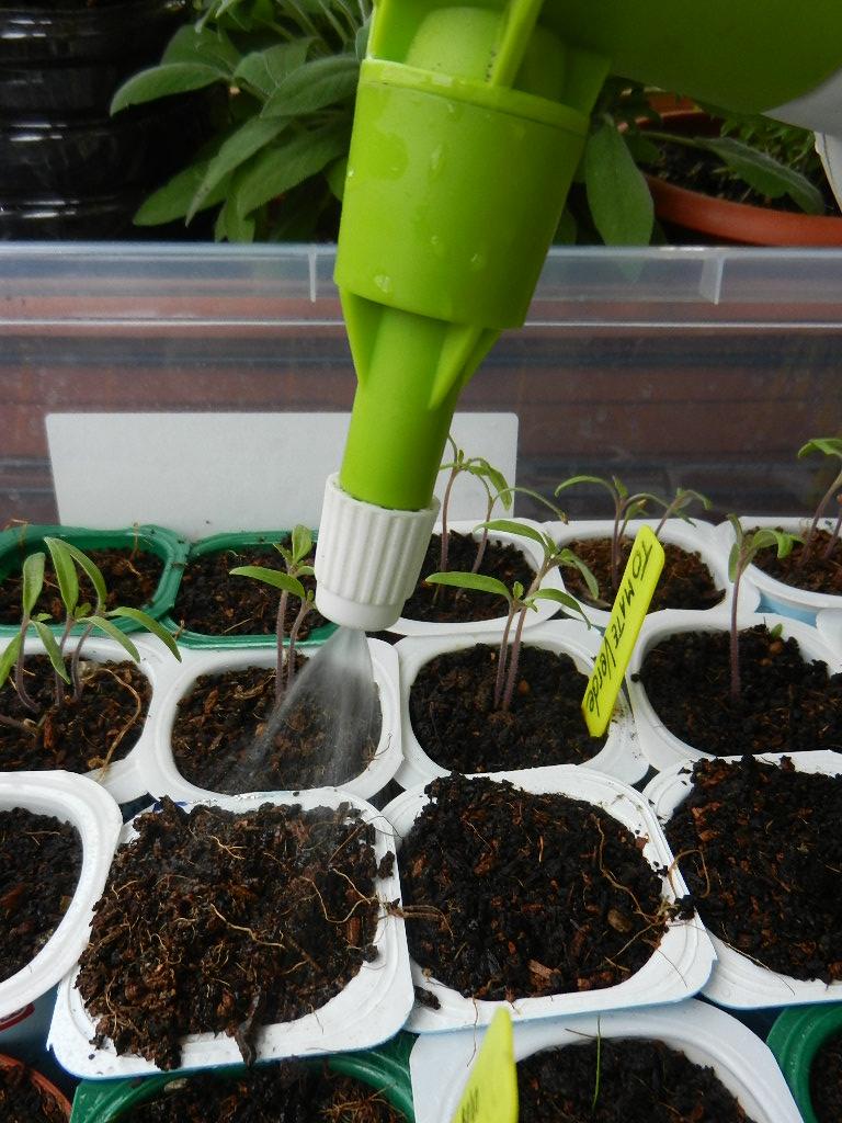 riego de semilleros
