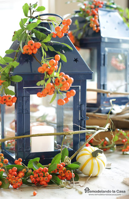 Blue lantern with orange berries from Mountain Ash shrub