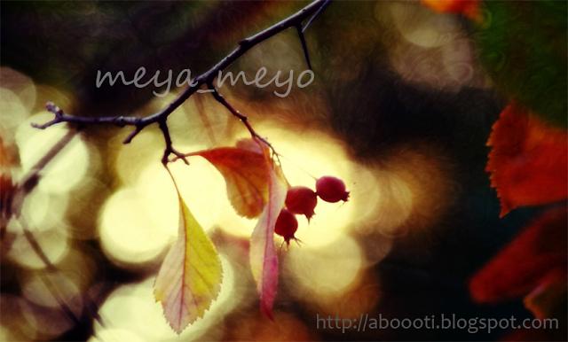.meya_meyo.
