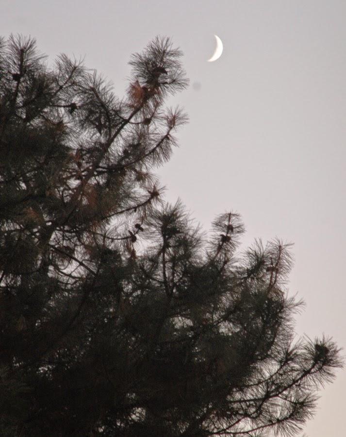 месяц над Ботсадом