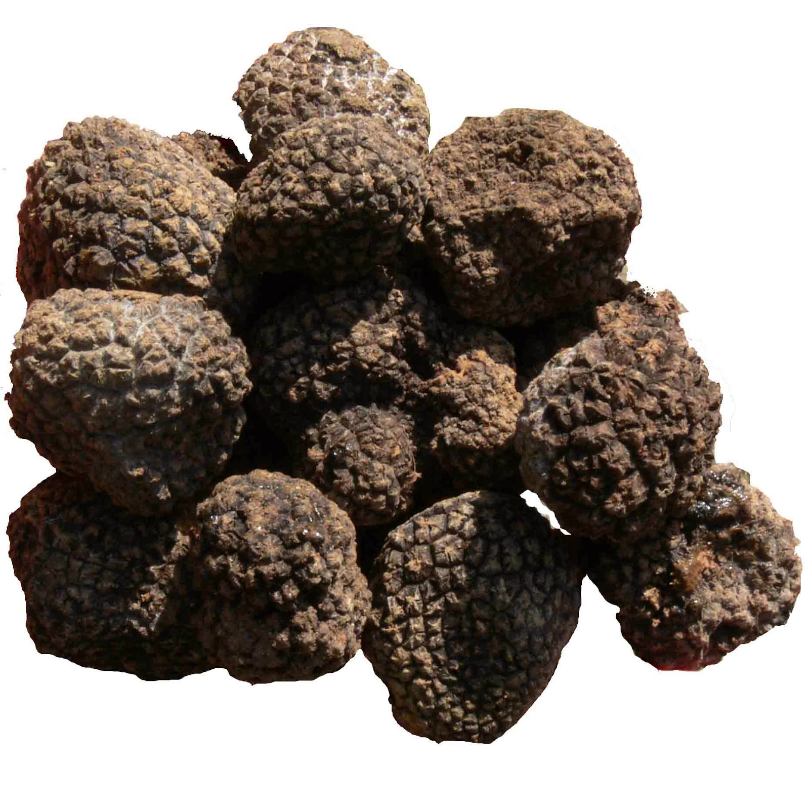truffle-juice-vs-truffle-oil