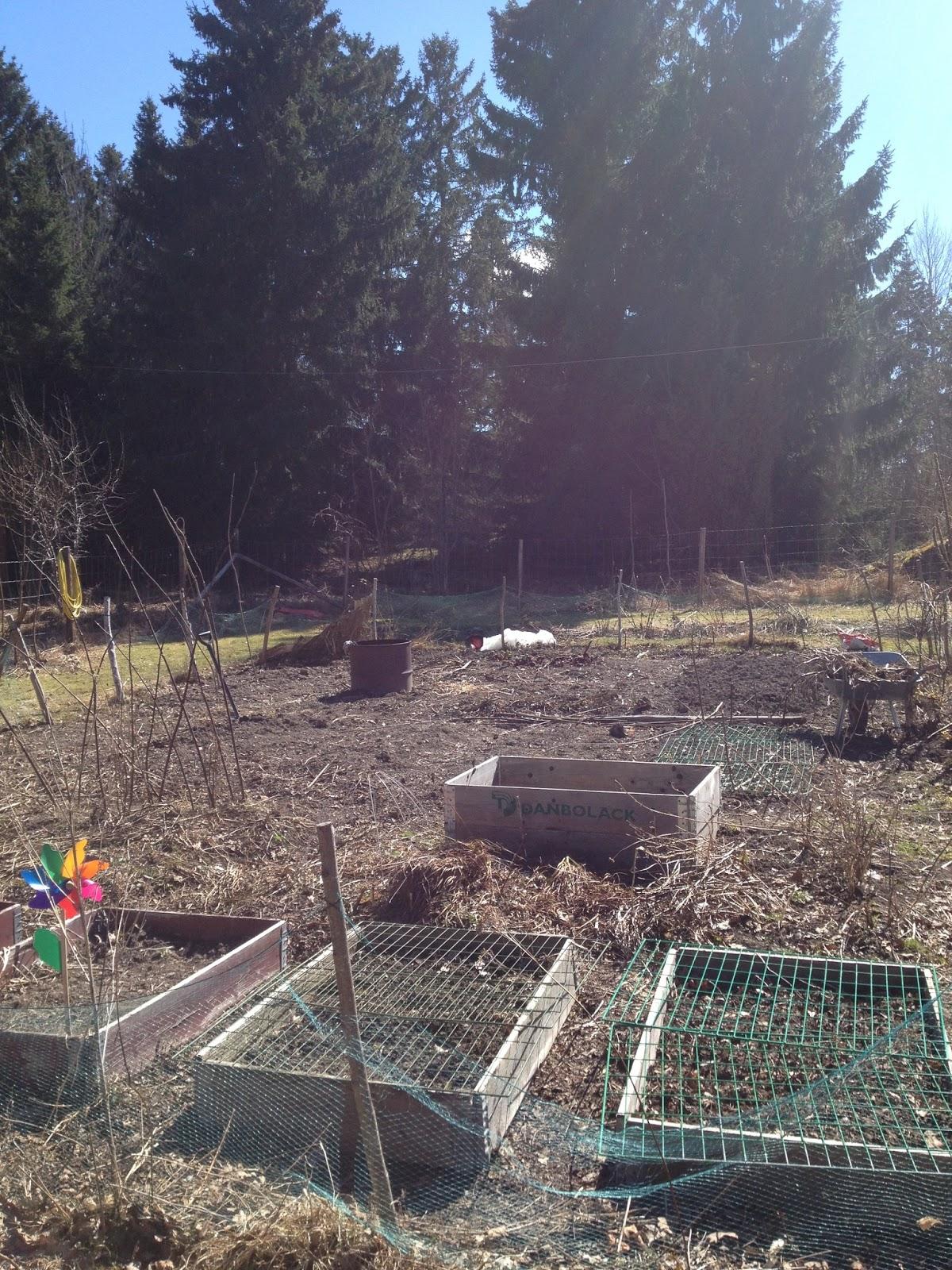 Lill hasta trädgård: april 2013