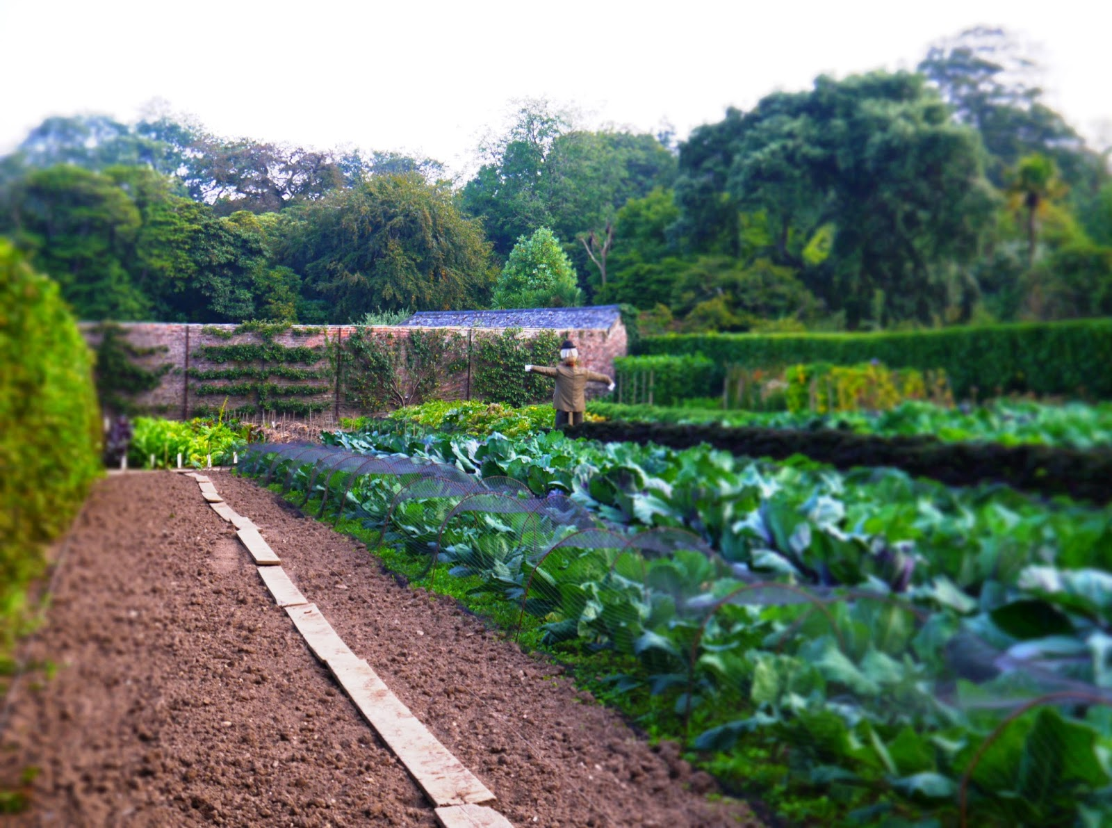 The Lost Gardens of Heligan, Cornwall - vegetable garden