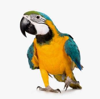 Птицы узнай по силуэту