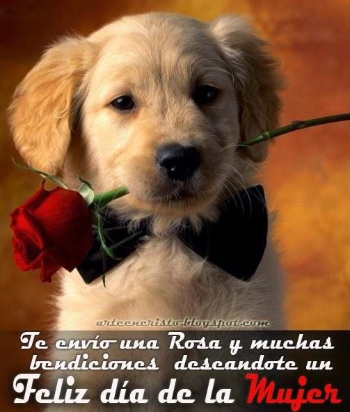 Frases De Feliz Día Internacional De La Mujer: Te Envío Una Rosa