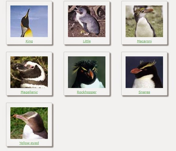 types of penguins