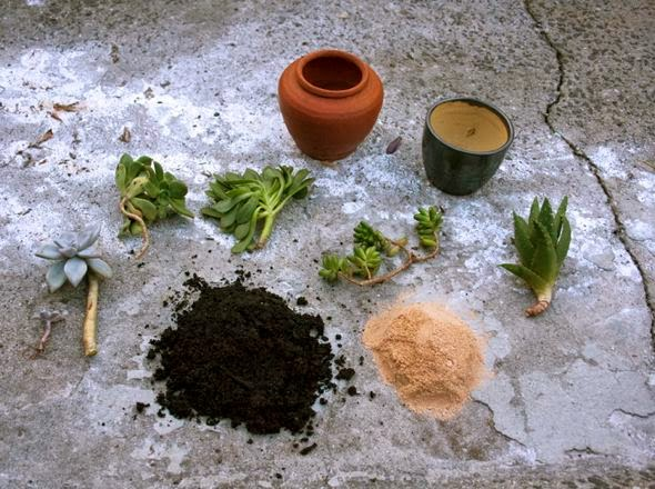 how to make potting mix for succulents