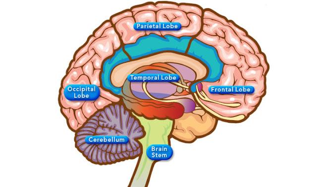 Brain Function Map3