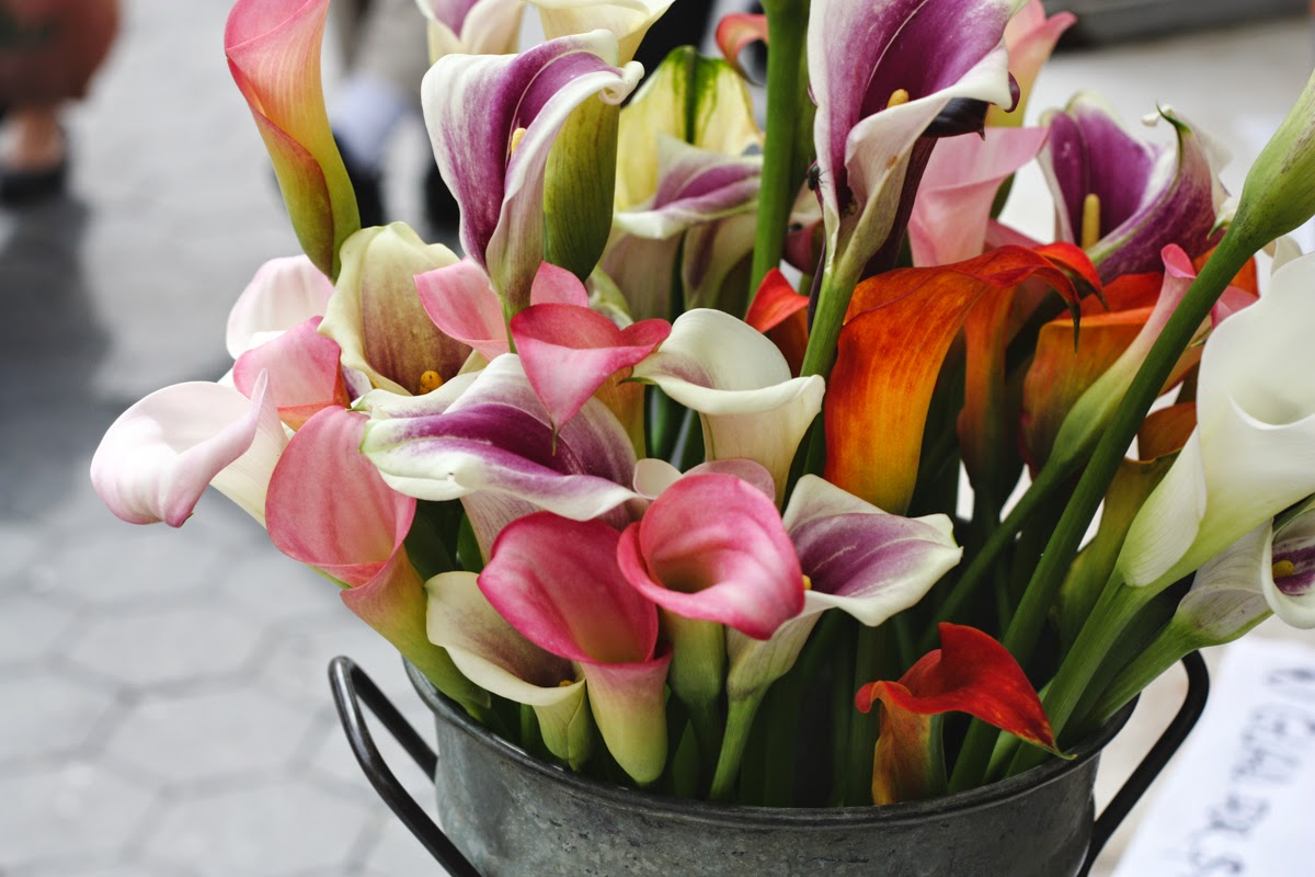 union square greenmarket calla lillies