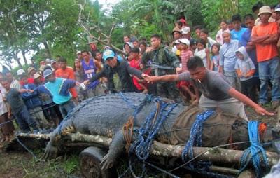 菲律賓獵人活捉的史前巨鱷