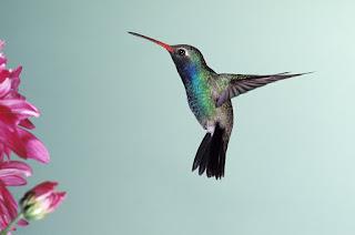 humming bird onequartermama autistic stimming humming