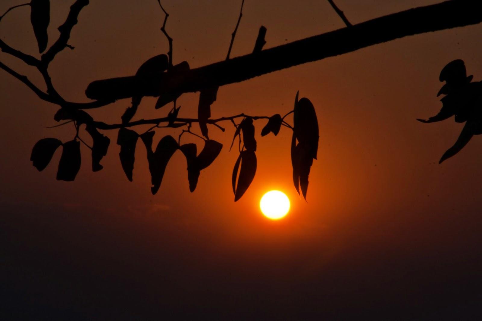 mopane tree sundown namibia safari